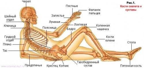 Целитель орис - лечение коленных суставов ортез тазобедренных суставов
