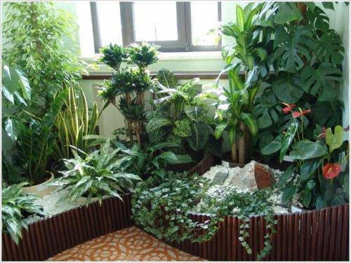 Фитонциды комнатных растений