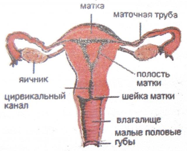 rovesnica: воспаление дженских органов.