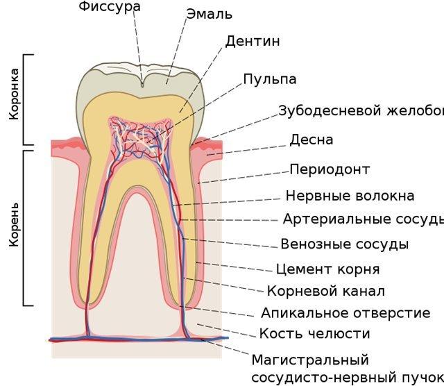 запах изо рта причины и лечение народными