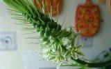 Народные рецепты с индийским луком