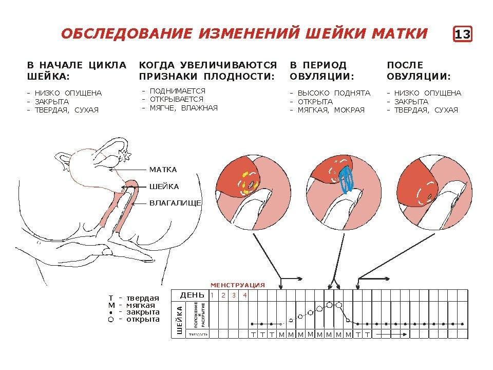 Выделение перед месячными беременность