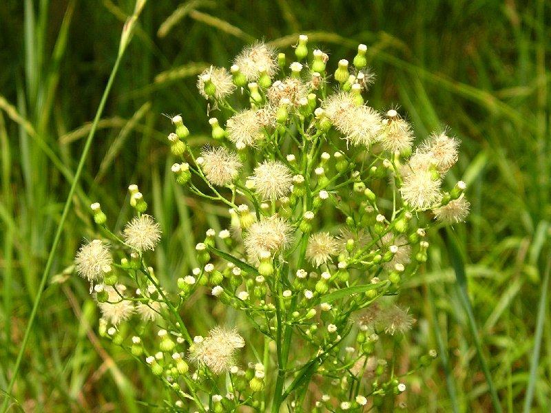 трава заткни гузно применение фото