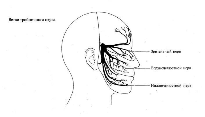 Ветви тройничного нерва