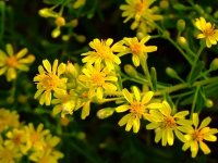 Применение травяных сборов для лечения атеросклероза