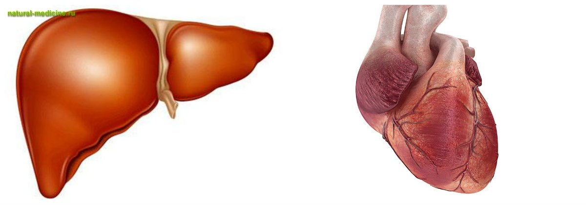 кровь повышенный холестерин