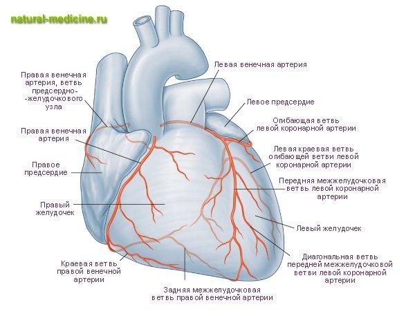 лечение повышения холестерина в крови